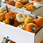 Mini Pumpkins Box