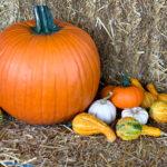 The Garden Spot Pumpkins Gourds Squash