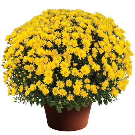 Mum Hankie™ Yellow